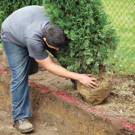 Man rolling a tree into a trench