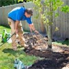 roger cook adds Water and Stakes for how to plant a healthy tree