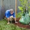 roger cook adds Mulch for how to plant a healthy tree