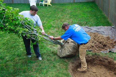 roger cook and another man demonstrate how to plant a tree
