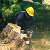 professional tree removal, step 5, Level the stump (or grind it away)