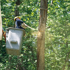 a cut above november 2001 tree removal upkeep story