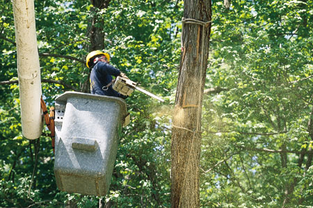 a cut above november 2001 tree removal upkeep story
