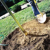 backfilling the hole when planting a new tree