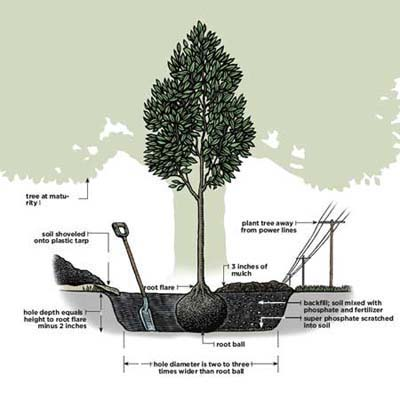 planting-a-tree diagram