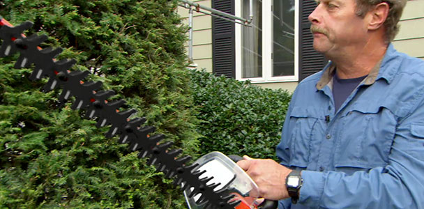 Roger Cook shows the right way to prune shrubs