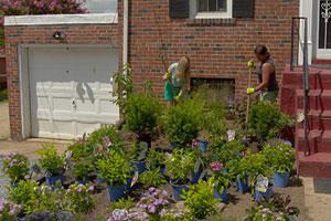 Jenn Nawada and homeowner turn a front yard into a garden to attract birds and pollinators