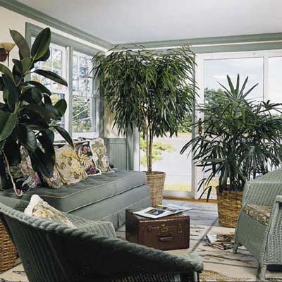 Greenery without green thumbs easy houseplants this for Low maintenance indoor plants