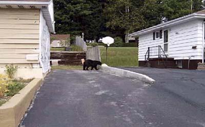 a black bear pays a visit