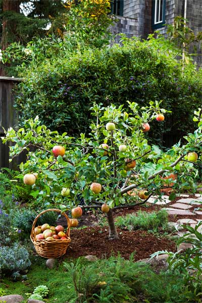 Garden Design With Homegrown Fruit On A Manageable Scale Grow Little Trees Shade